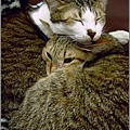 http://blog.sina.com.tw/myimages/135/8071/images/1177543999_5.jpg