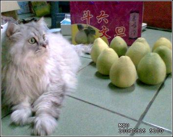 阿喵和柚子