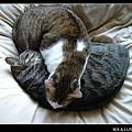 http://blog.sina.com.tw/myimages/55/9015/images/051223-waluna.jpg