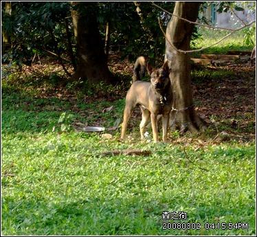 森林裡的狗