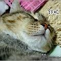 http://blog.sina.com.tw/myimages/135/8071/images/20080902125635911.jpg