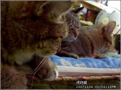 http://blog.sina.com.tw/myimages/135/8071/images/20071105100053520.jpg