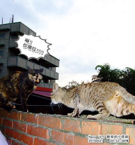 20100521-hana-newcats.jpg