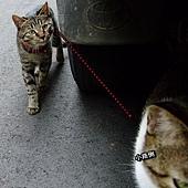 20101115小黑虎.JPG