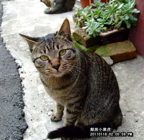 20110118黑虎.JPG