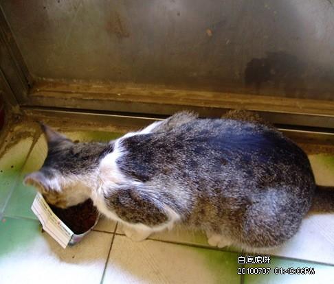 990707-白吃吃.JPG
