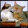 http://blog.sina.com.tw/myimages/55/9015/images/050816-wami5.jpg