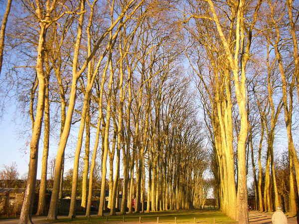 凡爾賽宮通往後宮的小徑