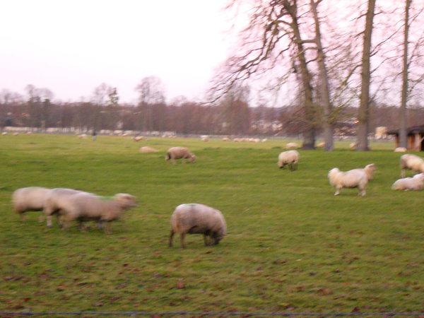 凡爾賽宮後的草皮