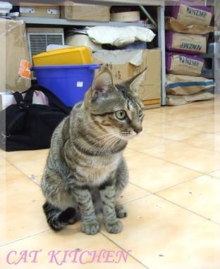 20070203-明瑄貓2.jpg