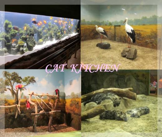 愛寶室內動物1.jpg