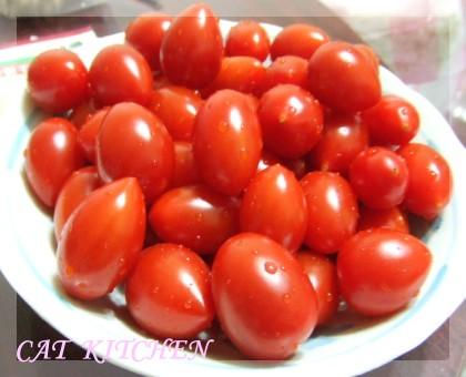 20090415小蕃茄.JPG