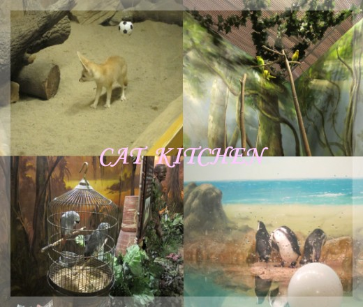 愛寶室內動物.jpg