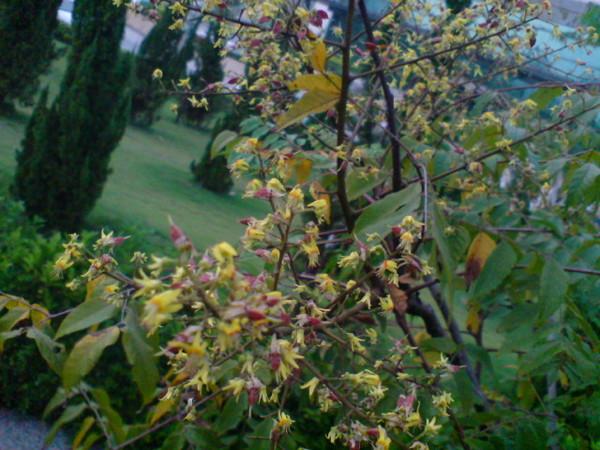 停車場旁樹上的花