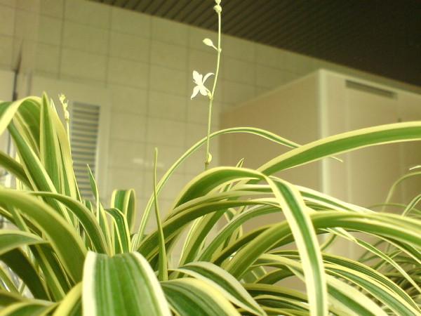 廁所裡的小花