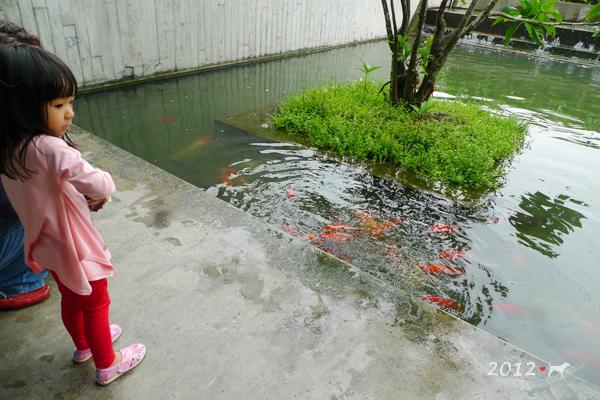20120924-勝洋水草-02