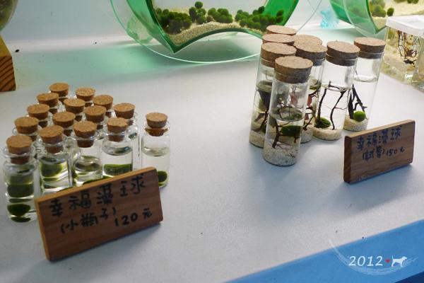 20120924-勝洋水草-07
