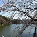 20130319-千鳥ヶ淵緑道-03