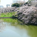 20130319-千鳥ヶ淵緑道-17