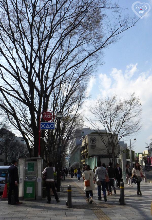 20130319-表參道-05