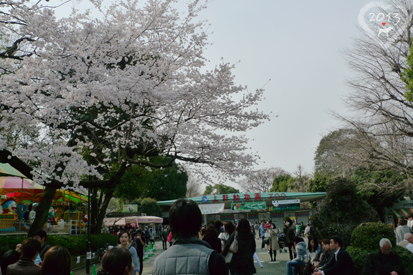 20130320-上野動物園-20