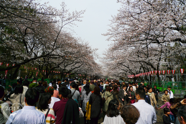 20130320-上野公園-16