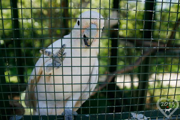 20130804-森林鳥花園-41