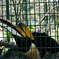 20130804-森林鳥花園-39