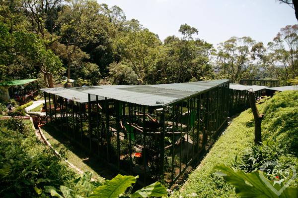 20130804-森林鳥花園-38