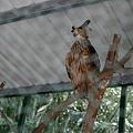 20130804-森林鳥花園-19