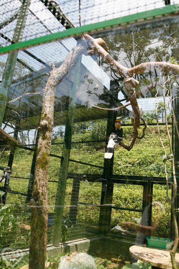 20130804-森林鳥花園-15