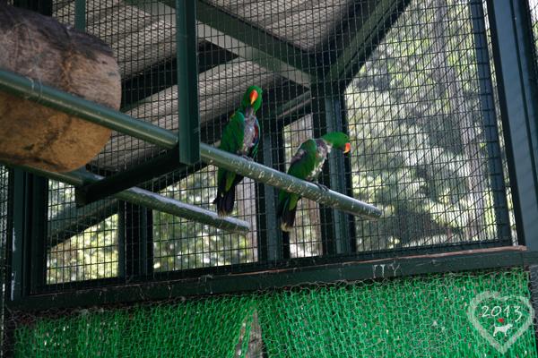 20130804-森林鳥花園-13