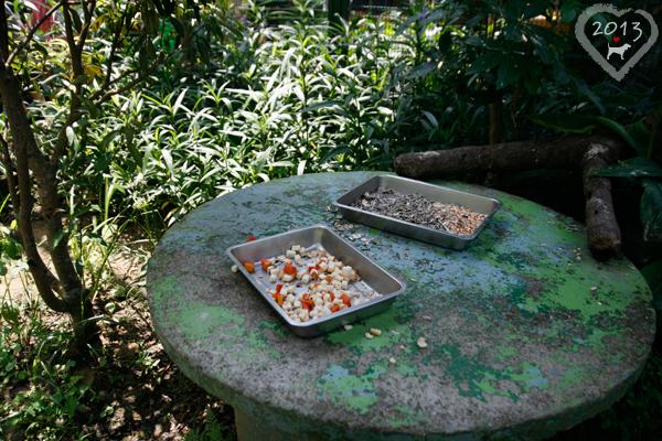 20130804-森林鳥花園-11