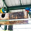 20130804-森林鳥花園-10