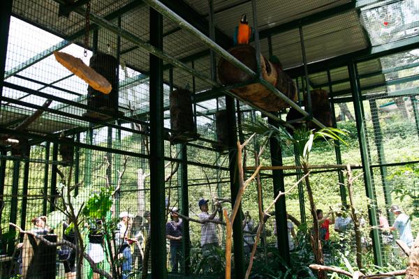 20130804-森林鳥花園-09