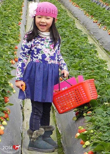 20140216-清香採草莓-08