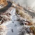 20140220-武陵登山口-10.jpg