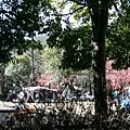 20140220-武陵露營-11.jpg