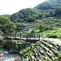 20140531-竹子湖採繡球花-01.jpg