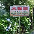20140531-竹子湖採繡球花-02.jpg