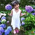 20140531-竹子湖採繡球花-13.jpg