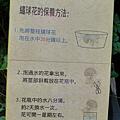20140531-竹子湖採繡球花-22.jpg