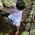 20140531-竹子湖採繡球花-26.jpg
