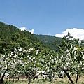 20140715-武陵採水蜜桃-08