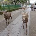 20150309-奈良公園-13.jpg