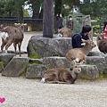 20150309-奈良公園-15.jpg