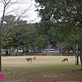 20150309-奈良公園-17.jpg
