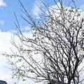 20150310-嵐山觀光-01.jpg
