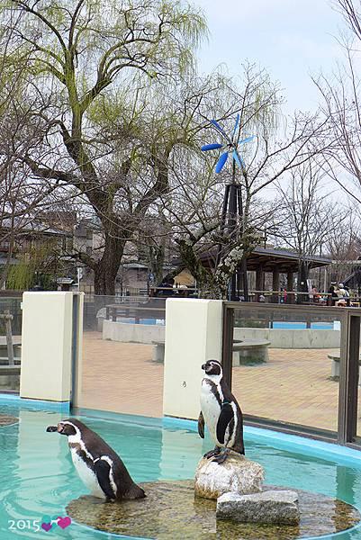 20150311-京都動物園-31.jpg