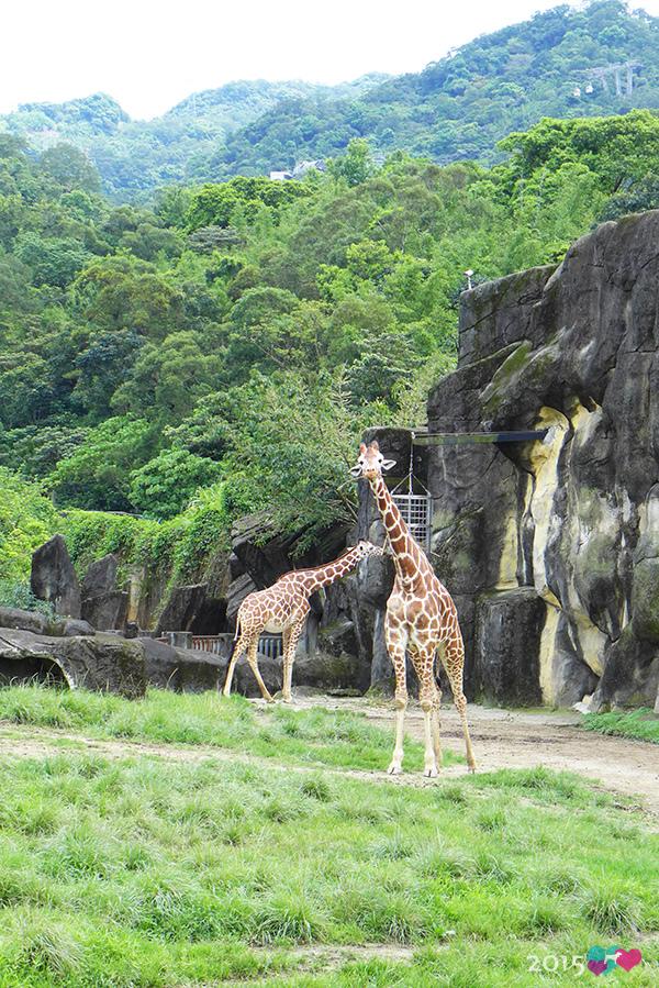 20150423-zoo-04.jpg
